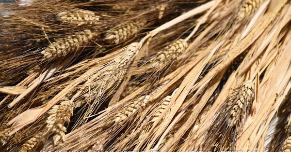 2018-12-14 Fil di Grano-Convegno sul grano duro siciliano