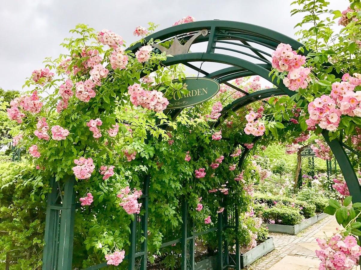 アーチを飾る優美な薔薇(写真提供:阿部くん)