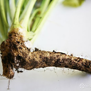 How to Prepare Horseradish