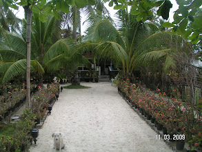 Photo: Main Entrance , Mike & Diose´s Beachcottage.  +63 905 263 2914-2915, www.malapascua.de Email: office@malapascua.de
