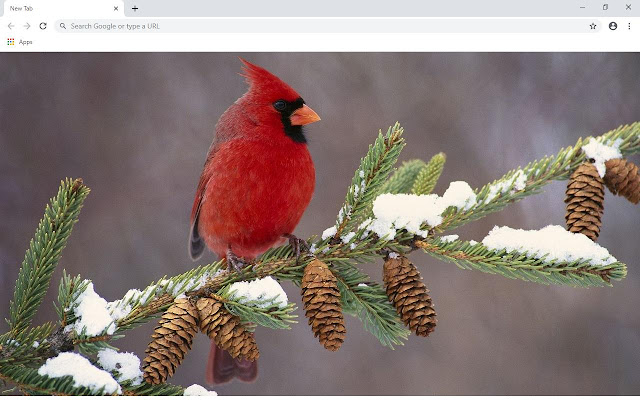 Birds Wallpapers and New Tab