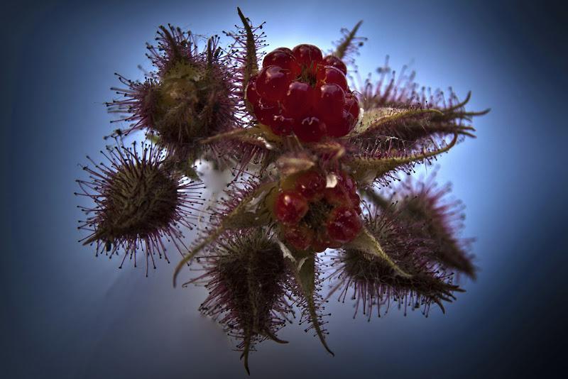Frutti rossi  di giorgio_travisi