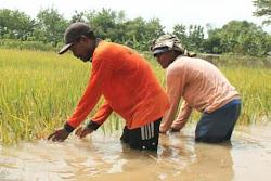 Kondisi Banjir di Ngawi terkini hari ini