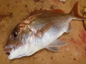 Photo: これも綺麗な真鯛!