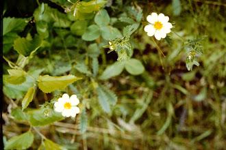 Photo: Flowers