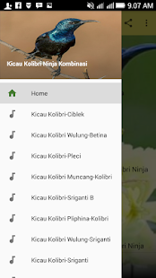 Kicau Kolibri Ninja Kombinasi Android Apps On Google Play Free