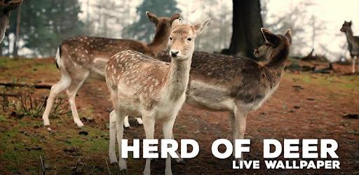 Herd of Deer Live Wallpaper - Apps on