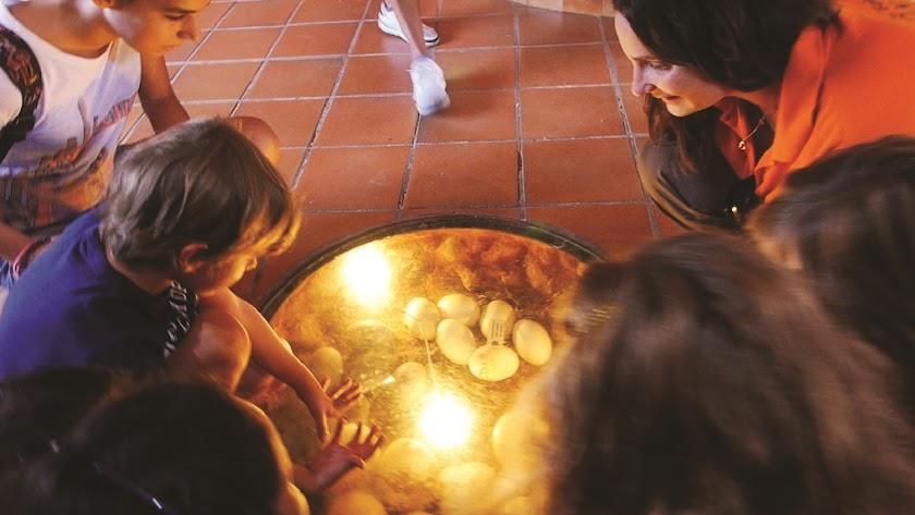 Grupo de jóvenes interactuando con un nido lleno de huevos.
