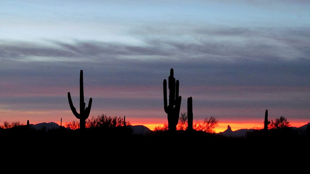 Saguaros at sunrise