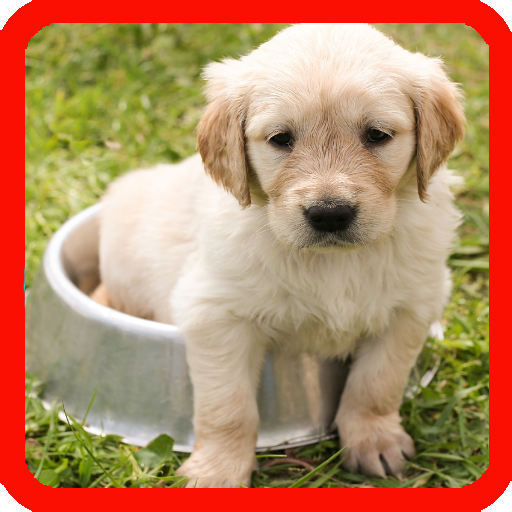 Training Of Puppies Android APK Download Free By Centuryapps