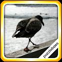 Jigsaw Puzzles: Seaside Birds icon
