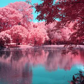 Tomorrow by Yohanes Arief Dewanto - City,  Street & Park  City Parks ( ir, false color, infrared, parks, cityparks,  )