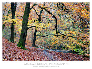 Photo: #TreeTuesday  Autumn Colours on the Crags Constitutional Trail  Firstly, I'd just like to say thanks and welcome to all the new people that have added me to their circles in the last few days!  I'm processing a set of images from a recent shoot at Hardcastle Crags at the moment, so I thought I'd post one of them for #TreeTuesday curated by +Christina Lawrie. Despite being well into November there was still some glorious colour in the trees on the Crags Constitutional Trail from Gibson Mill, along the banks of Hebden Water.  Canon EOS 5D, 24-105mm at 58mm, ISO 200, 4s at f22