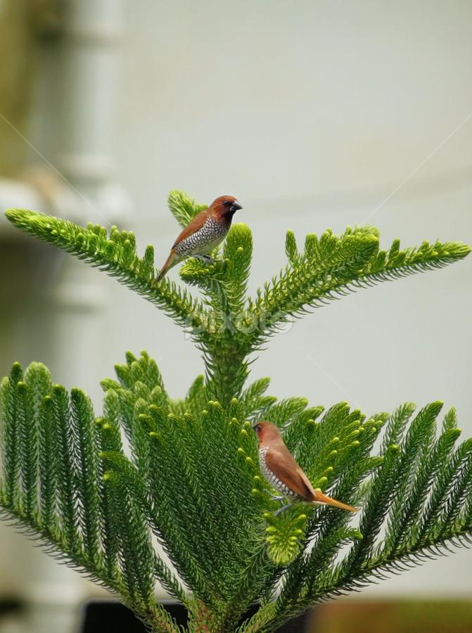 Love Pair by Phani Sekhar - Animals Birds