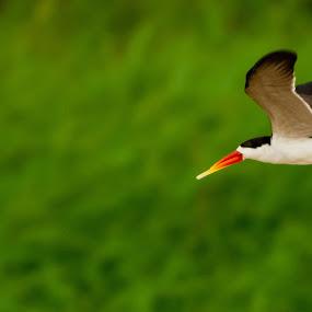 scanning the riverbeds by Fanie Weldhagen - Animals Birds