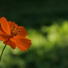 Lonely..... by Prithiviraj Kiridarane - Nature Up Close Flowers - 2011-2013