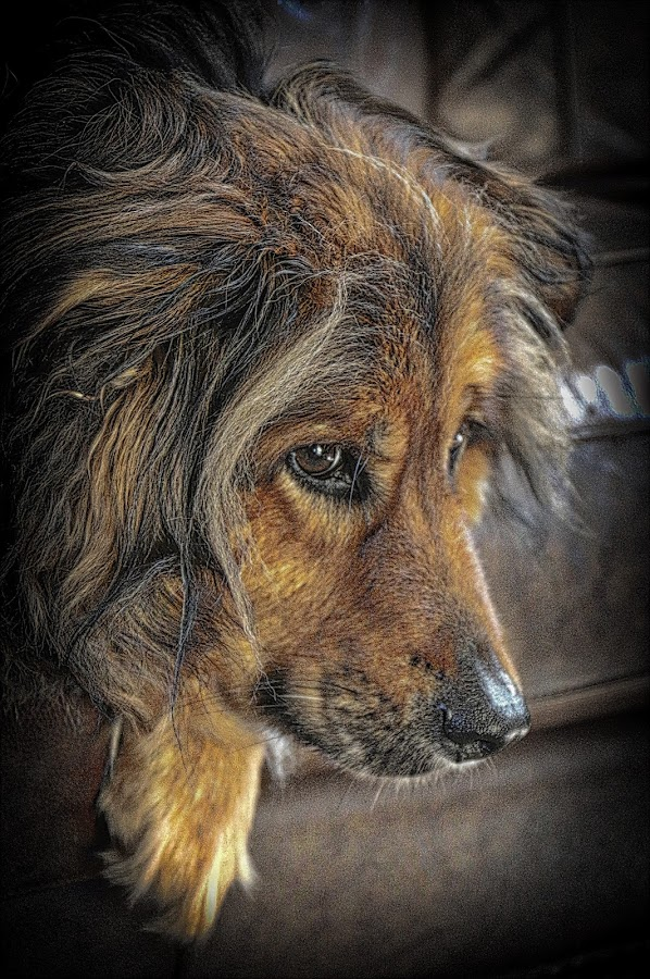 by Jim Antonicello - Animals - Dogs Portraits (  )