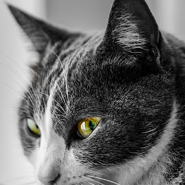 FELINE SPIRIT by Giovanni Labisi - Animals - Cats Portraits ( cat, photography, portrait, animal, eyes )