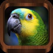 Bird Sounds, Calls, Songs & Ringtones
