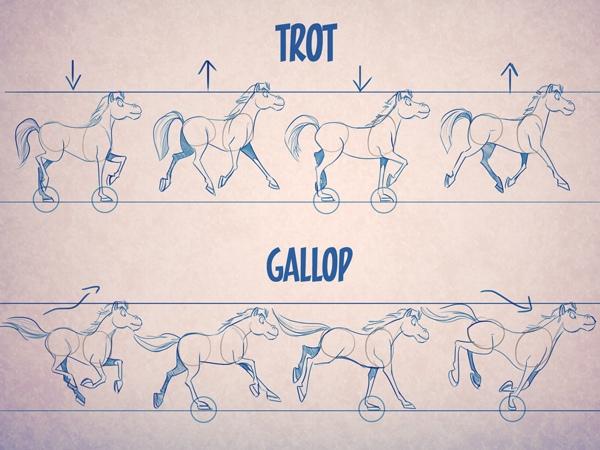 Упражнение. Попытайтесь найти траектории движения в рисунках вверху. Также обратите внимание, что галоп - блестящий пример использования сжатия и растяжения.
