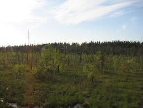 Photo: За окном автобуса увидишь болота, много-много болот