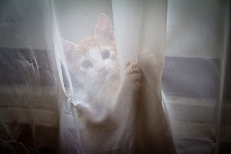 Photo: Yes Minos, this is the curtain you're supposed to leave alone!!!