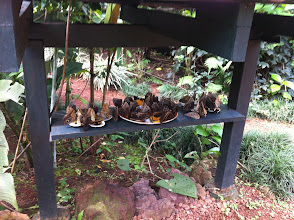 Photo: Butterfly feeding station