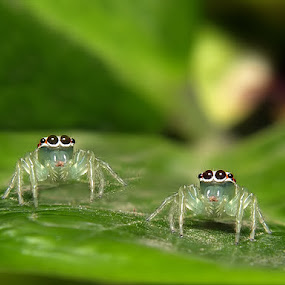 by Deddy Setiawan - Animals Insects & Spiders